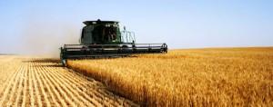 reports_michigan_wheat_oats_barley_1_634853894174940000